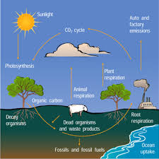 the carbon cycle windows to the universe