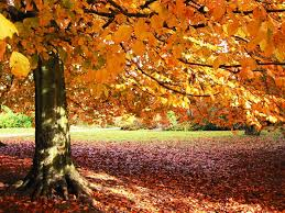 fantasy autumn wallpaper autumn pictures wallpaper wallpapersafari