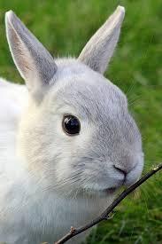 rabbit rabbit rabbit bunny free photo on pixabay