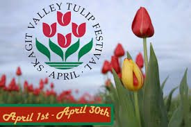 skagit valley tulip festival bloom map washington tulip festival pictures 2013 info skagit valley
