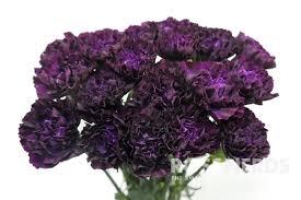 Wholesale Carnations Wholesale Moon Series Dark Purple Carnations Moon Vista