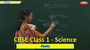 plants class 1 cbse science science syllabus live videos