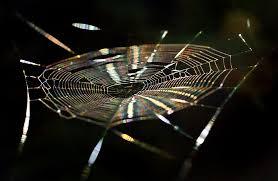 free photo cobweb spider rainbow color free image pixabay