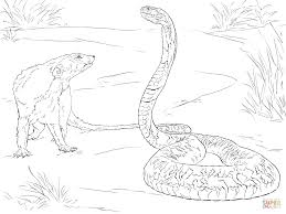 spitting cobra and mongoose coloring page free printable