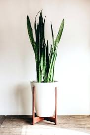 indoor plant tall indoor plant pots nice cool decorative flower pots indoor
