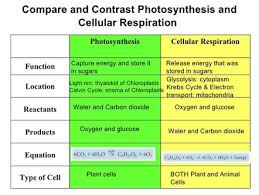 photosynthesis and cellular respiration chart real fitness