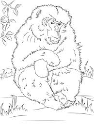 cute baby monkey coloring pages cute japanese macaque monkey coloring page animal drawings of