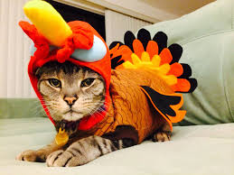 your daily happy thanksgiving and cats in turkey costumes