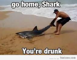 You Re Drunk Meme - go home shark you are drunk funny shark meme