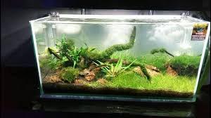 Aquascaping Shop 2feet Fish Tank 2 Nature Aquascaping Surat Aquarium Shop In