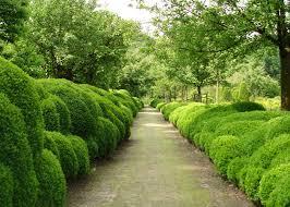 belgian garden designer jacques wirtz u0027 famous cloud boxwood