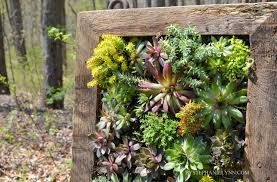 succulent wall planter how to build a vertical garden