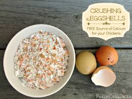 ground eggshells crushed eggshells as a free calcium source for your chickens