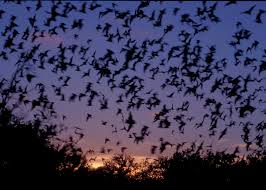 junior naturalist 4 cool facts about bats and 1 scary one amc