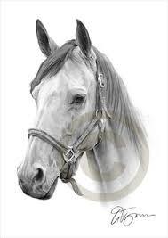 gallery artist horses pencil drawing drawing art gallery