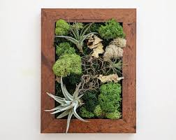 framed vertical wall garden with multiple air plants and