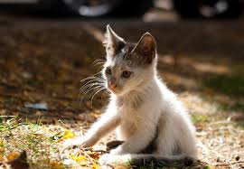 6 things you can do to save kittens u0027 lives u2013 adventure cats