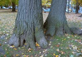 anthropomorphic trees toronto gardens