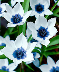 white and blue flowers 79 best blue bronze images on beleza and black