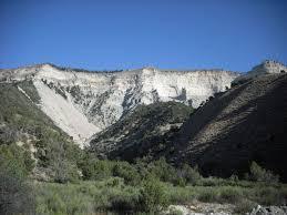 native plants of colorado rare colorado plants and thousands and thousands of native seeds