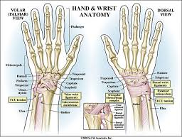 Ankle Anatomy Ligaments Bone On Hand And Foot Diagram Quiz The Ankle Joint Articulations