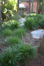 native plants sydney 88 best australian native garden inspiration images on pinterest