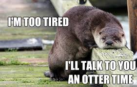Too Tired Meme - i m too tired i ll talk to you an otter time cats n otters