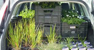 plant delivery aberdyfi garden design planting phase