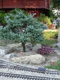Garden Tree Types - trees for your trains choosing and cultivating dwarf conifers