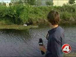 cora canap 600lb alligator lifted by forklift out of cape coral canal fox 4