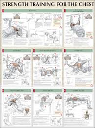A Good Bench Press Weight Best 25 Great Chest Workouts Ideas On Pinterest Gym Workouts