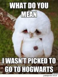 Memes That Are Funny - 29 funny owl memes that are so funny they re actually a hoot