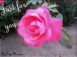 romantic site a nice rose for you just for you