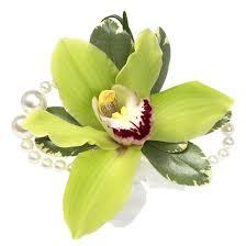cymbidium orchid cymbidium orchid shop venetian