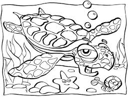 free coloring pages turtle 6665 bestofcoloring