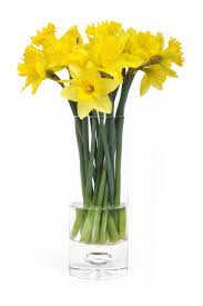 Free Vase Daffodils Free Stock Photo Yellow Daffodils In A Vase Isolated