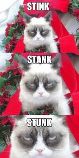 Grumpy Cat Christmas Memes - a very grumpy christmas december 25th