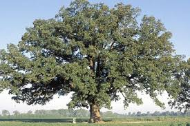 tree shrub and vine facts mdc discover nature