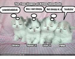 Sleepy Meme - the four stages of kiten sleepitude rvawnblinkblink ono inot