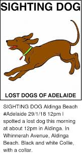 Lost Dog Meme - sighting dog lost dogs of adelaide sighting dog aldinga beach