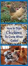 Backyard Chickens Magazine 22 Best Chichis Images On Pinterest Building A Chicken Coop
