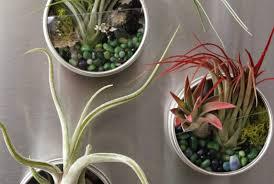 diy magnetic air plant terrariums tilly u0027s nest