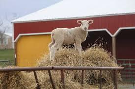 va farm bureau virginia farm bureau federation home