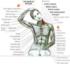66 dem bones images frozen shoulder exercises