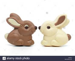 white chocolate bunny two milk and white chocolate bunnies sitting nose to nose
