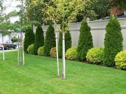 Backyard Landscaping Company Best 25 Fence Landscaping Ideas On Pinterest Privacy Fence