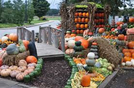 Growing Pumpkins On A Trellis Ode To Autumn State By State Gardening