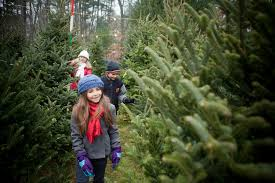 long island christmas tree farm guide 2016