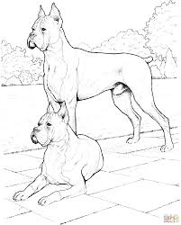 two boxer dogs coloring page free printable coloring pages