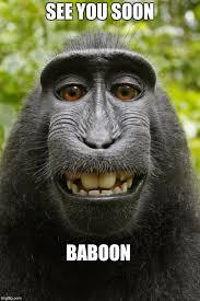 Baboon Meme - baboon meme 28 images baboons imgflip baboon phone blank